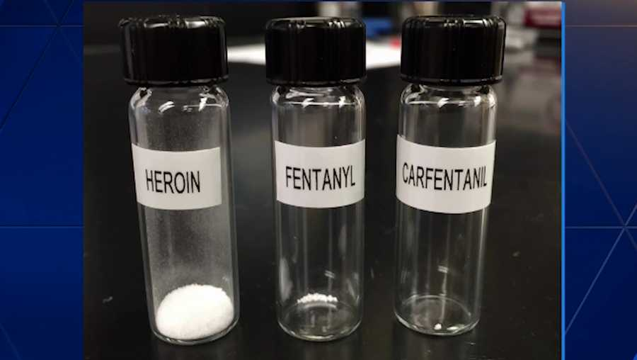 Fentanyl and Carfentanil, Dealing with the Most Deadly Synthetic Opioids